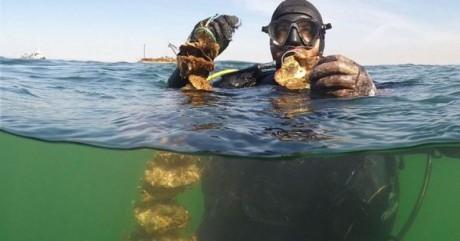 portarlington mussels 2